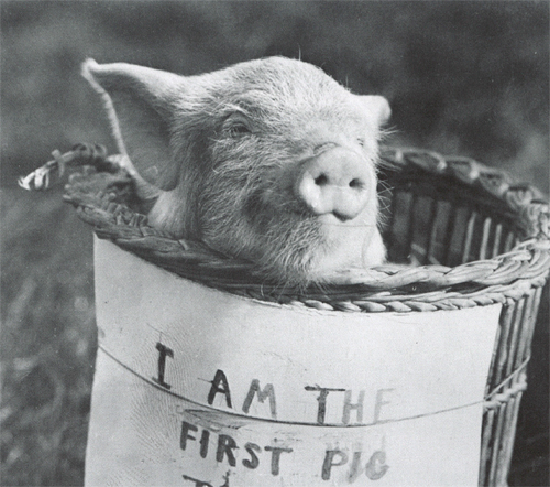 The first pig to fly, 1909 (3)