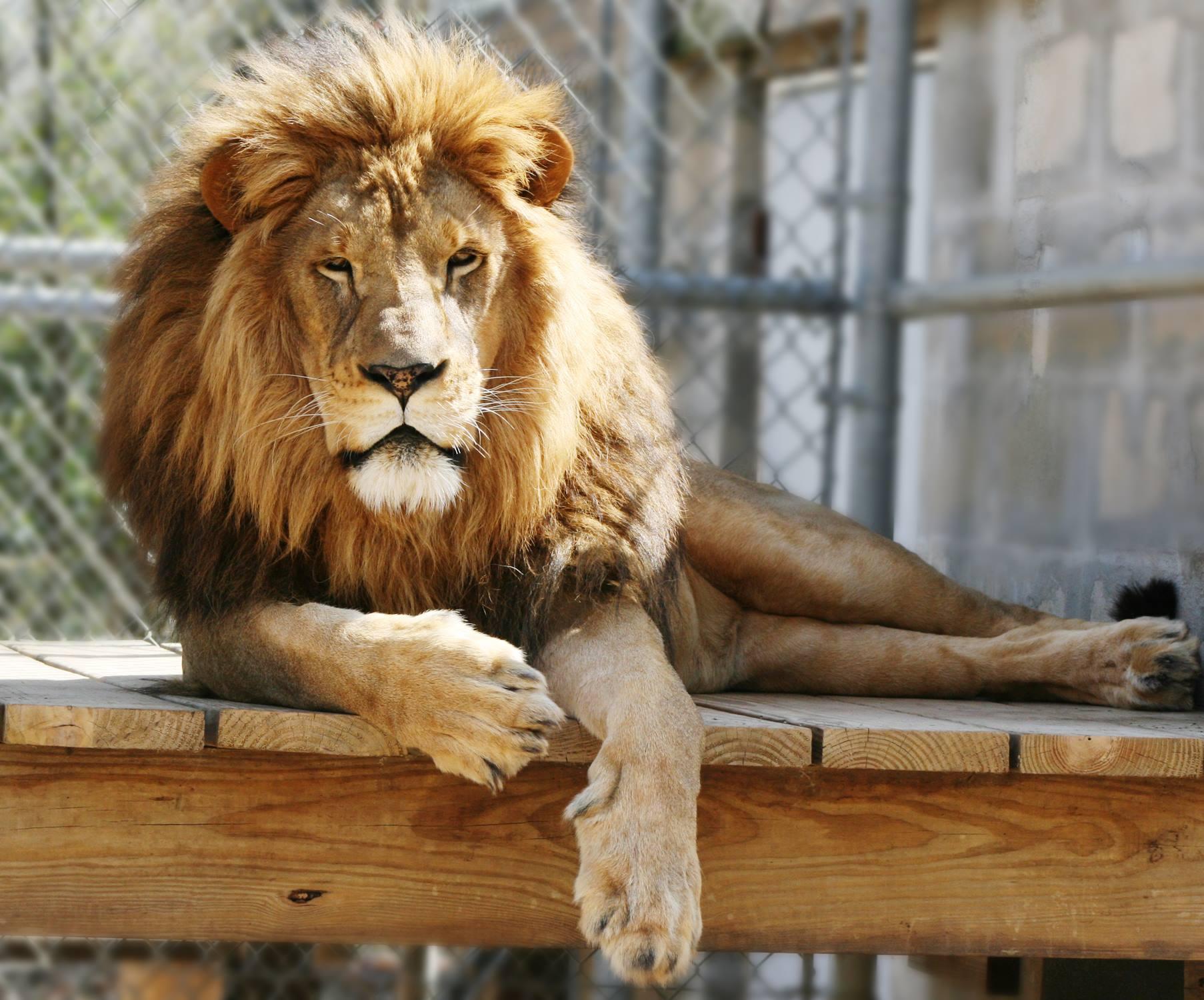 Top Il met en vente un zoo entier et ses 90 animaux sauvages sur Internet QX47
