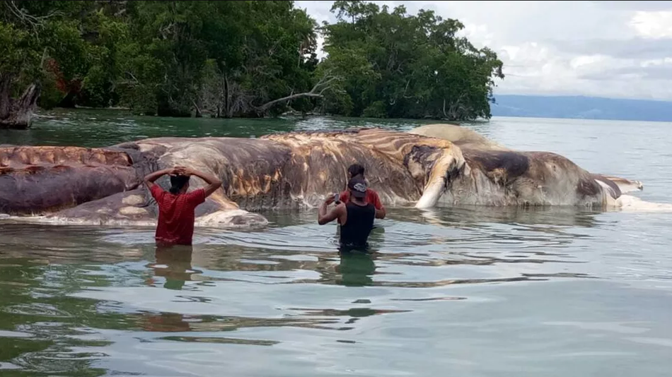 Calmar géant ou baleine ? Un