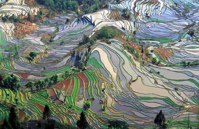 Les rizières en terrasse du Yunnan - Réseau Saida Nature®