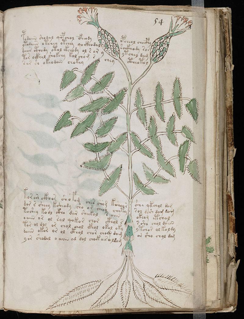 800px-Voynich_Manuscript_(107)