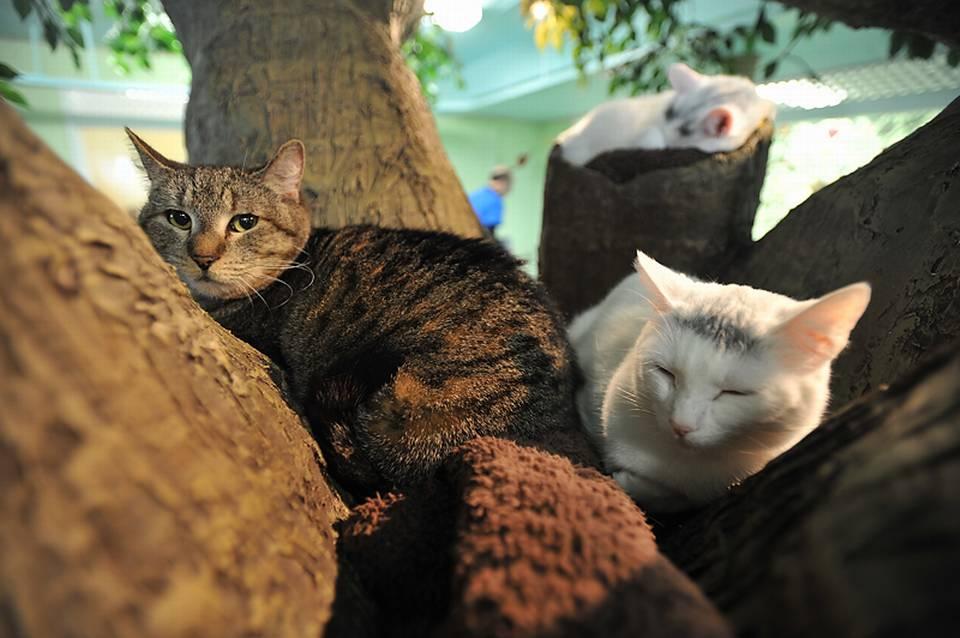 blaine_cats_127-source-prod_affiliate-39