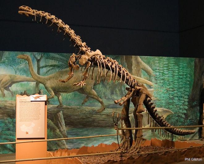 Lufengosaurus-140410