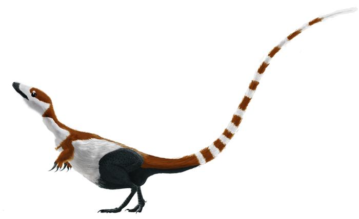 sinosauropteryx_mmartyniuk_solosml