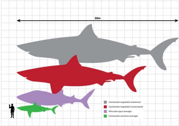 size-comparison