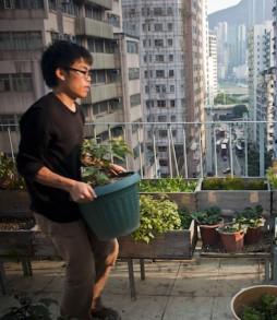 Les agricultures urbaines tendent à briser l'espace entre la ville et la nature © Christopher DeWolf