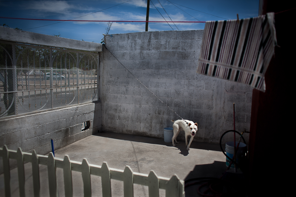 A guard dog stretches the length of his chain in front of a family of factory worker's home in Juarez. Random violence is common in Juarez. With the city destabilized locals live in fear of car jacking and home robberies that often end in murder.
