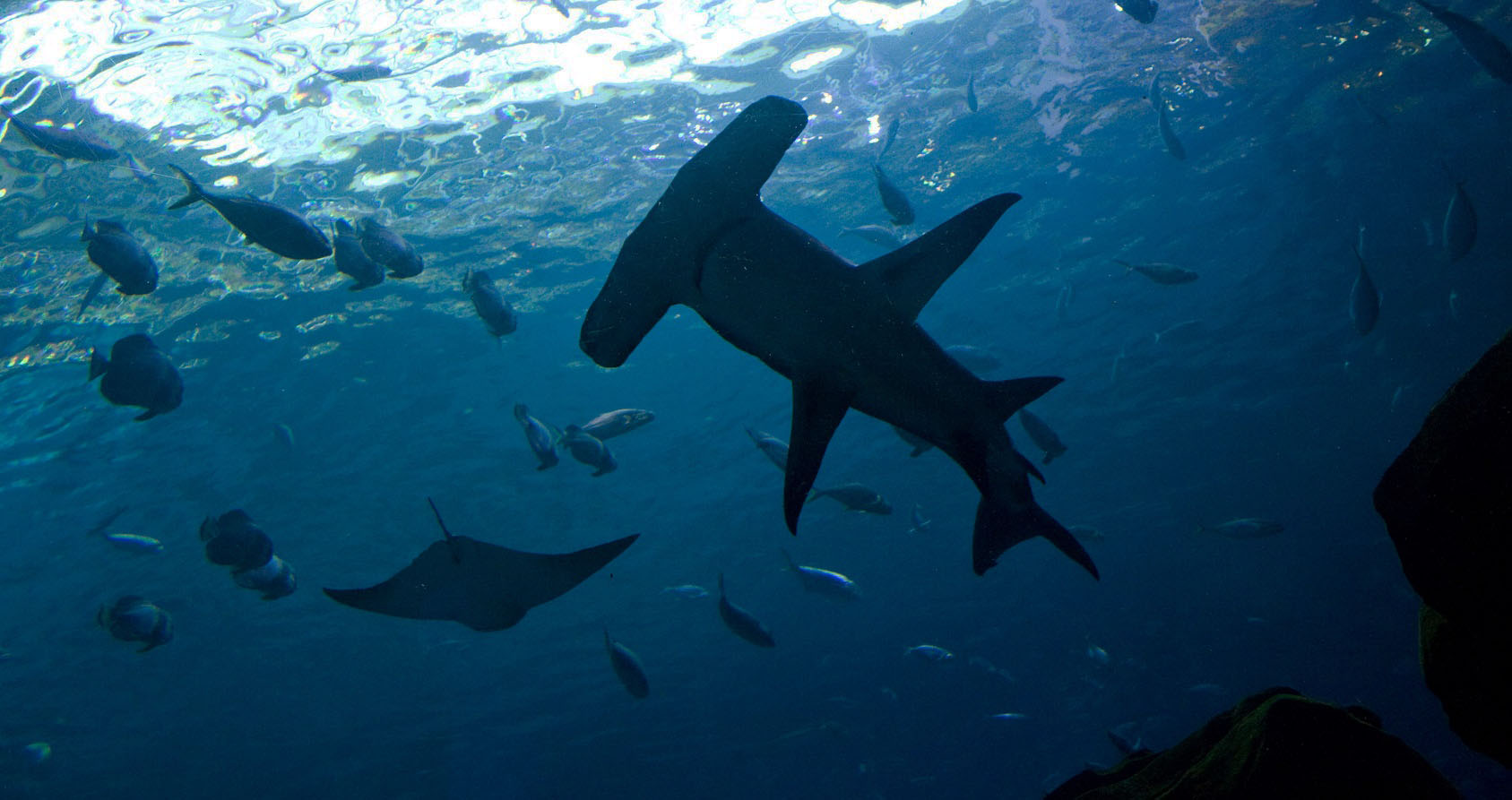 requins-ulyces-01