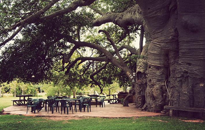 sunland-big-baobab-tree-1