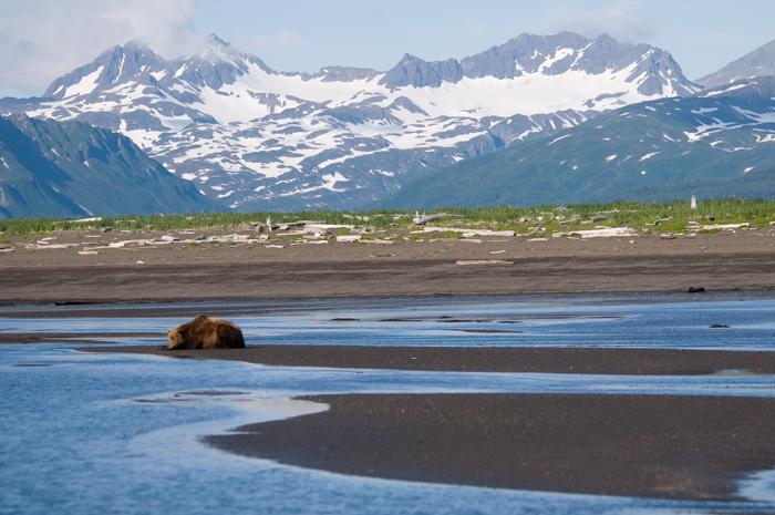 François et son père devaient se retrouver au parc national de Katmai pour les vacancesCrédits