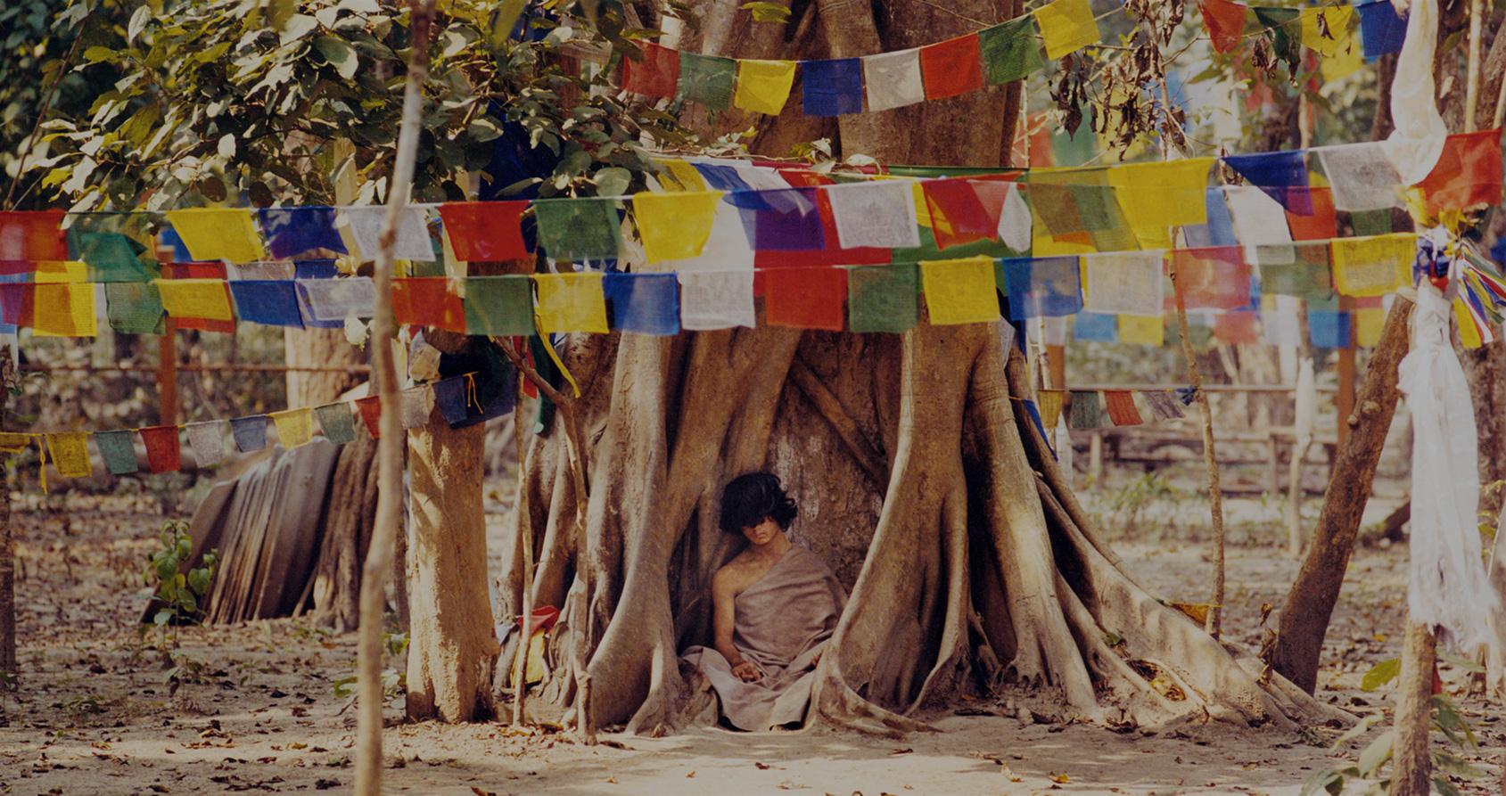 Dix mois sans boire et sans manger à méditer sous un arbre