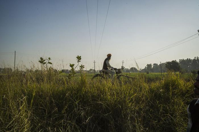 Un cycliste passe à coté d'un champ utilisé pour se shooter à l'héroïne Crédits : Sami Siva
