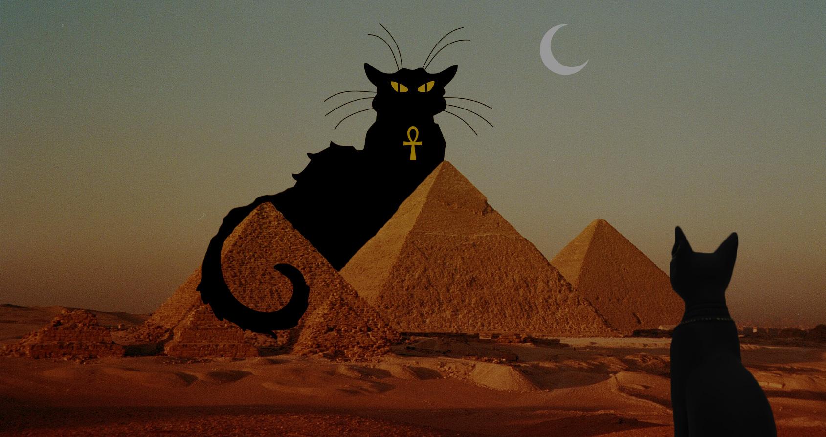Comment les pharaons ont inventé les chats domestiques