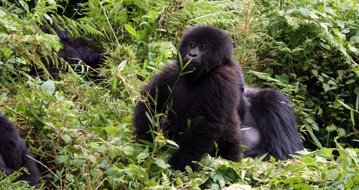 ulyces-gorillawars-03