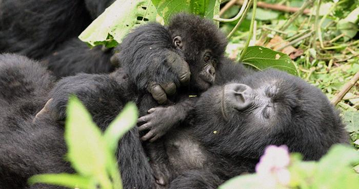 ulyces-gorillawars-05