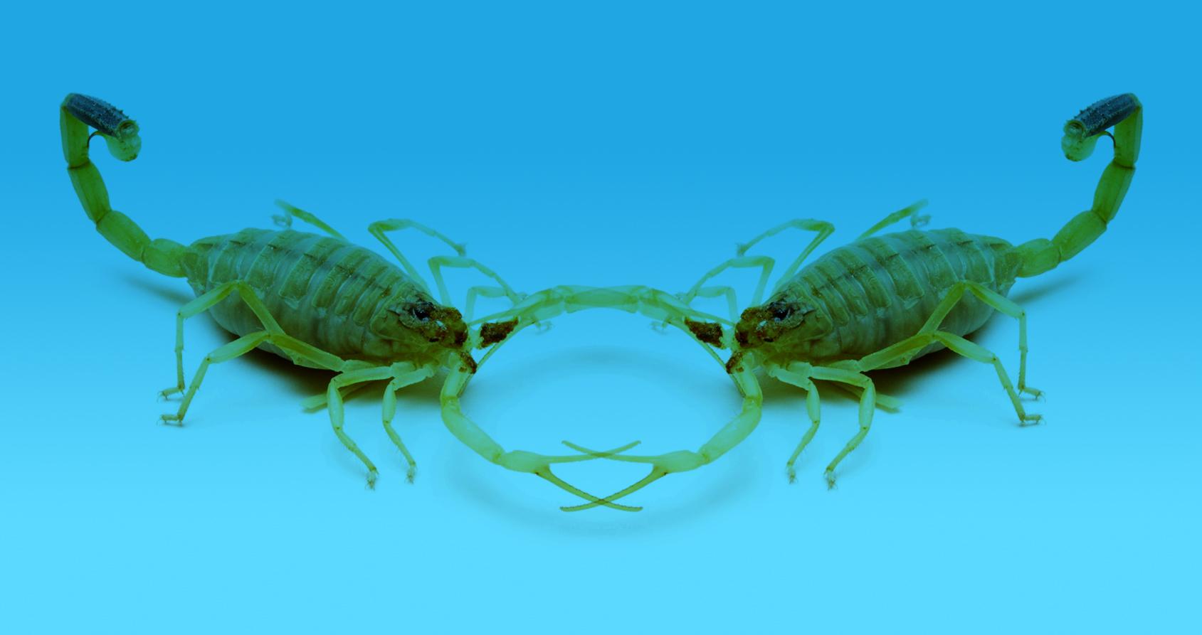 Le médecin qui voulait soigner le cancer avec du venin de scorpion