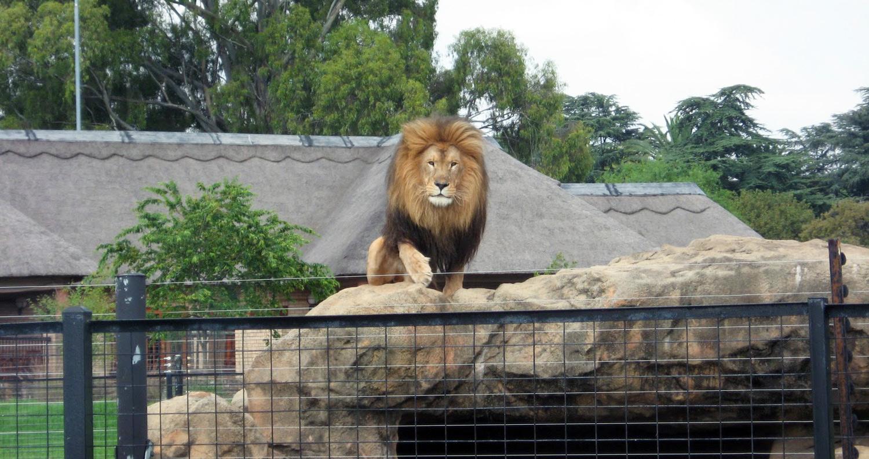 ulyces-lionwhisperer-04