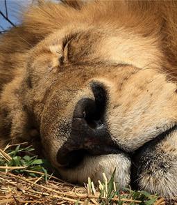 Les Secrets De Lhomme Qui Murmure à Loreille Des Lions