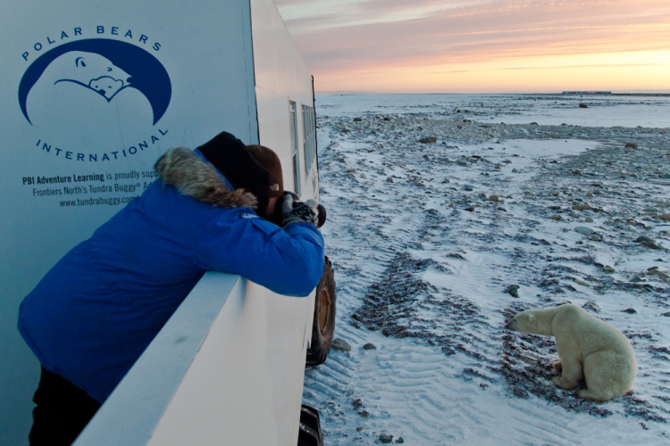 Polar Bear International, un groupe de conservation des animauxCrédits : CJ Carter/Polar Bears International