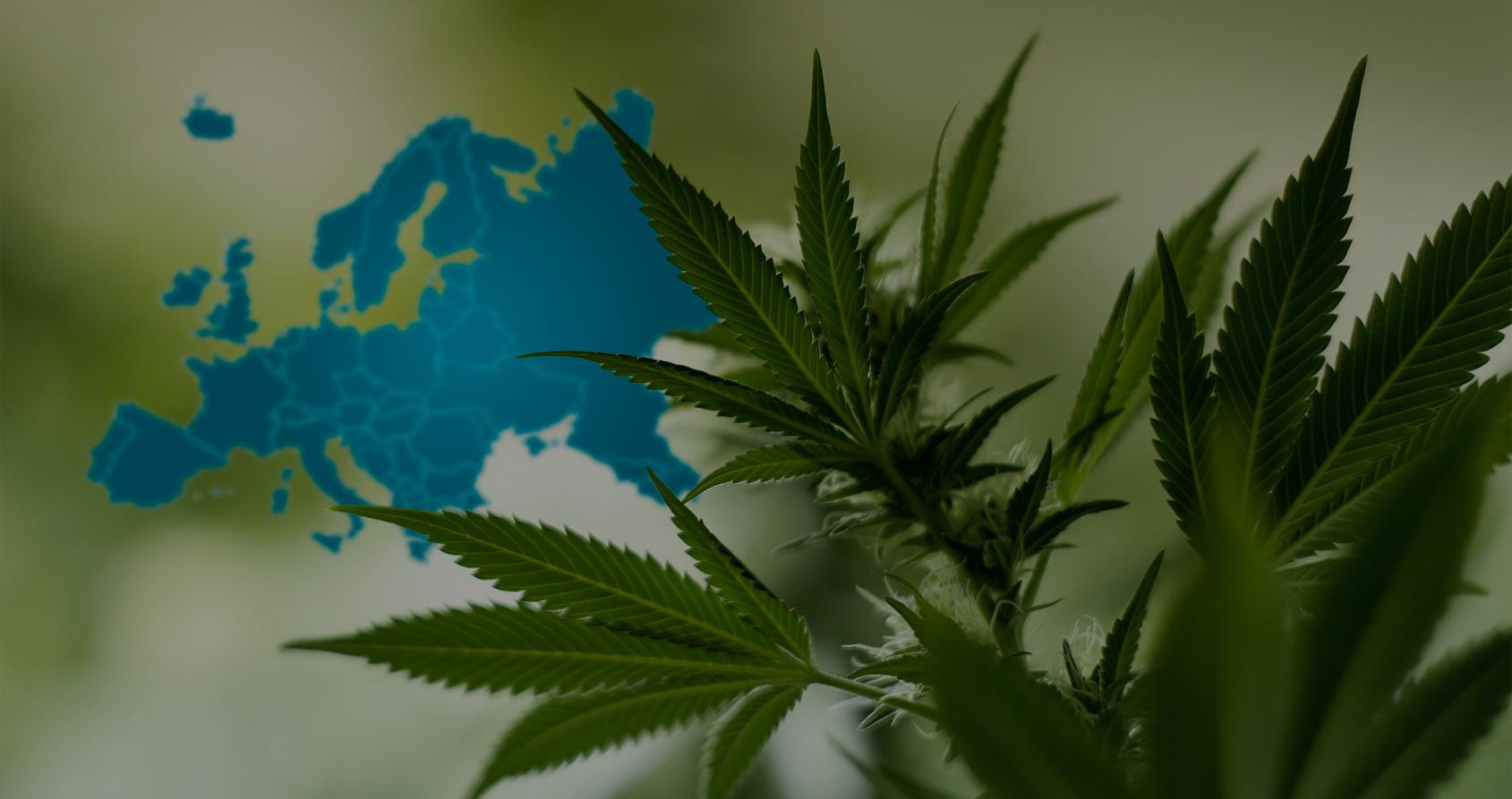 Comment ce géant du cannabis légal s'est lancé à la conquête de l'Europe