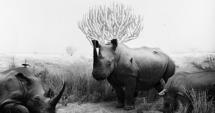 ulyces-rhino-02bis
