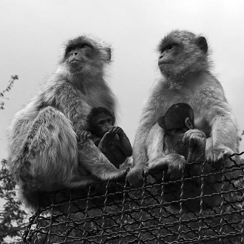 ulyces-singes-02