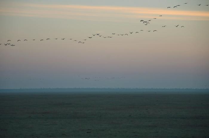 Des grues volent au dessus de la steppeCrédits Dimiter Kenarov