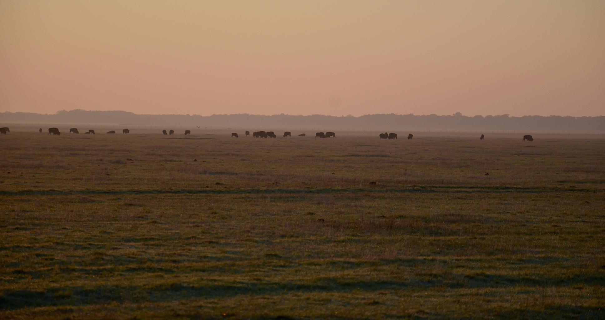 À la découverte du Serengeti ukrainien
