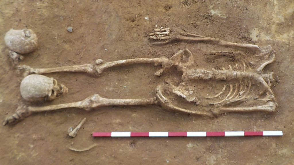 squelette datant