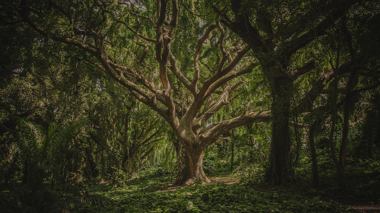 Les arbres et les plantes sont-ils conscients?