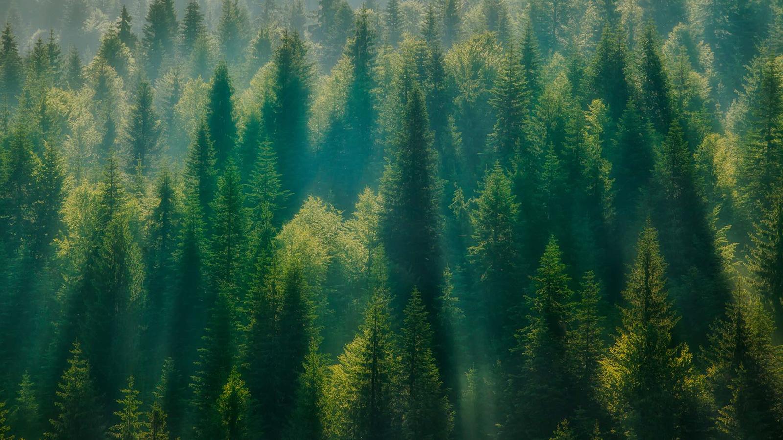 Ce scientifique veut planter mille milliards d'arbres pour sauver la planète