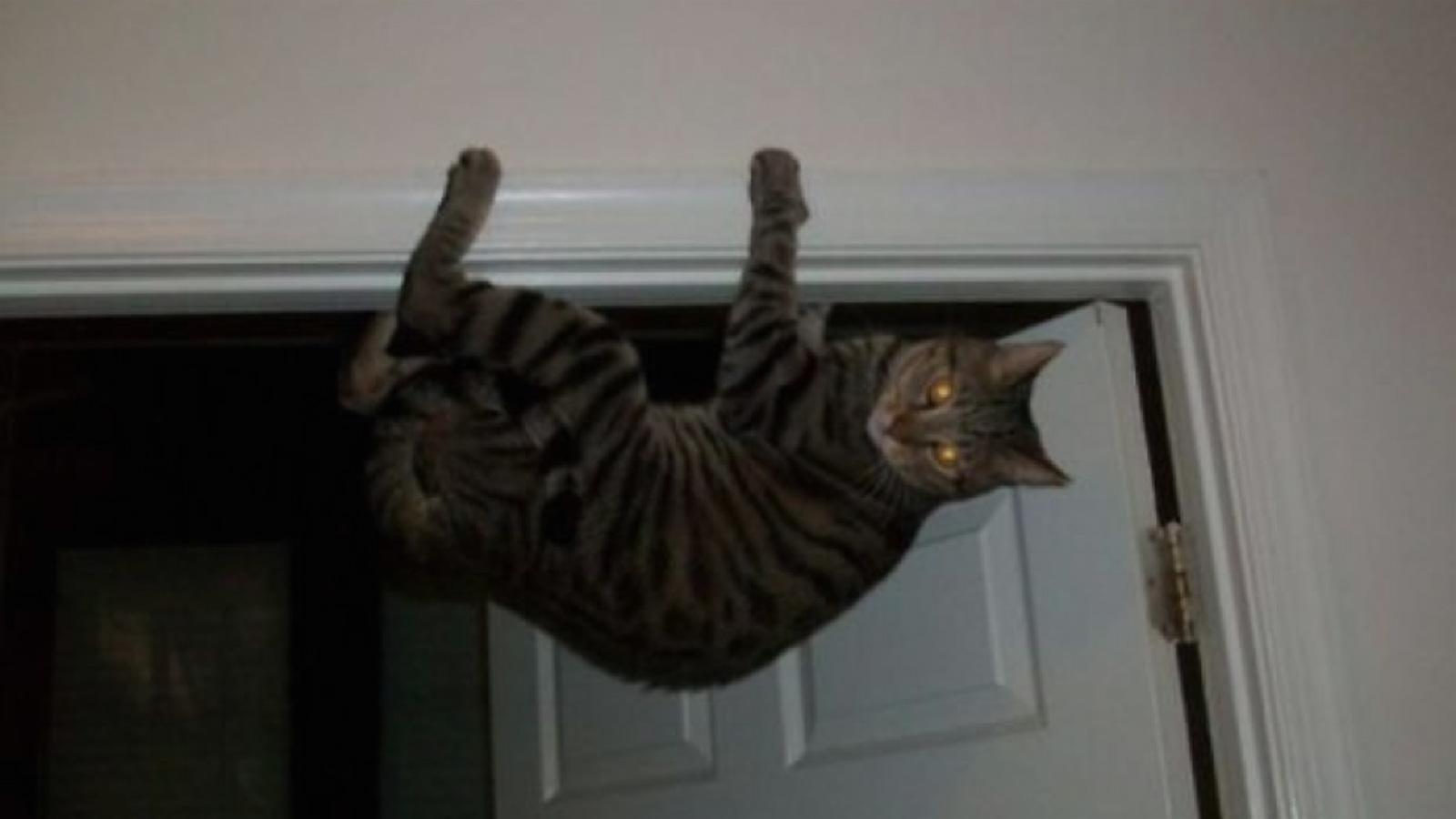 Ailurophobie : une histoire de la phobie des chats