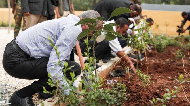 L'Éthiopie a planté 353 millions d'arbres en une journée, un record