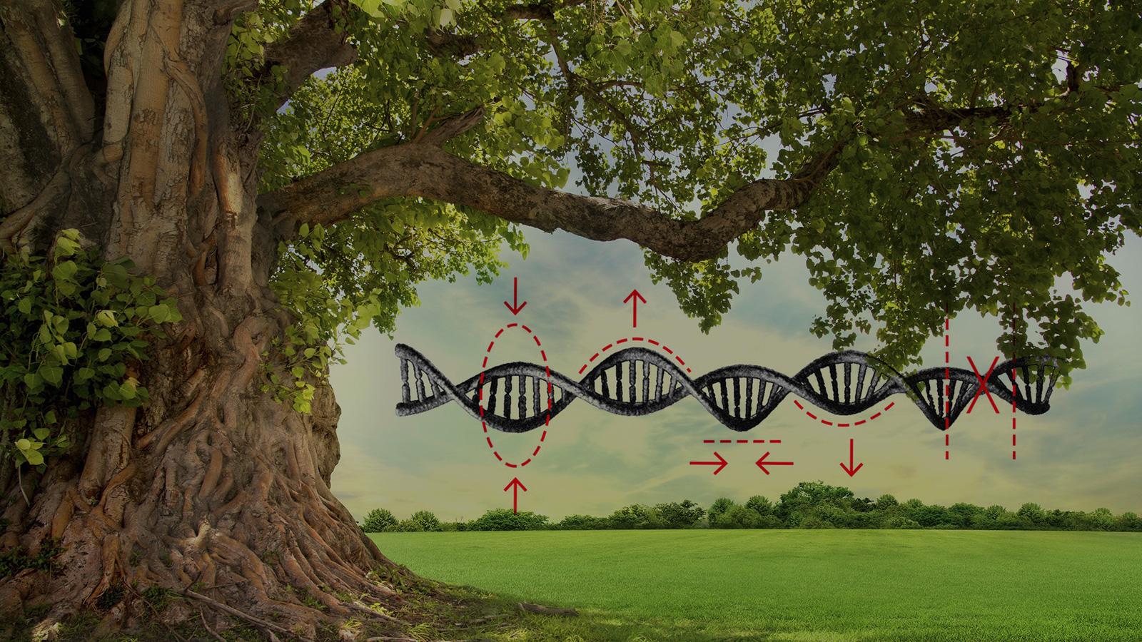 L'édition génétique est-elle notre seul espoir de survivre à la crise climatique ?