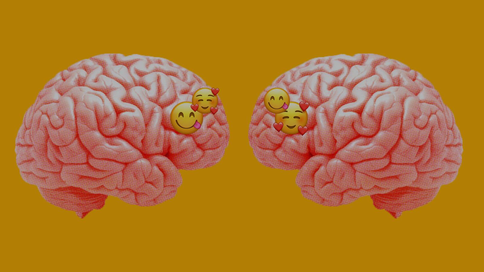 Peut-on être attiré·e par un cerveau ?