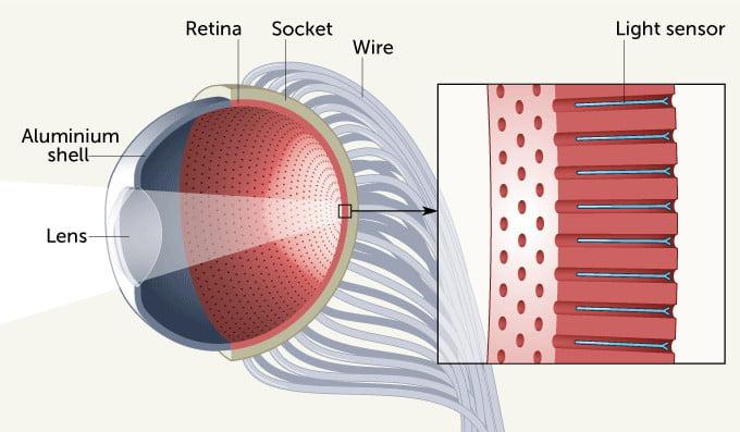 Cet œil artificiel pour cyborgs fonctionne à l'énergie solaire