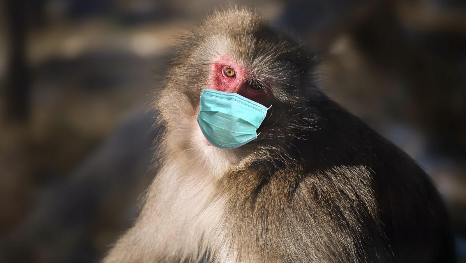 Comment les animaux utilisent la distanciation sociale pour éviter les maladies