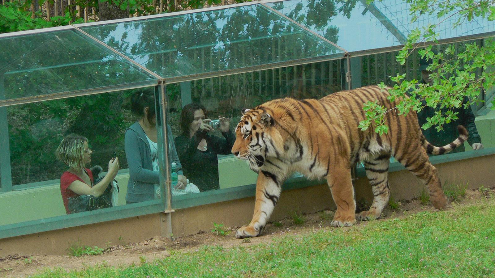 Faut-il fermer les zoos ?